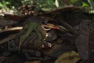 colombia wild magic