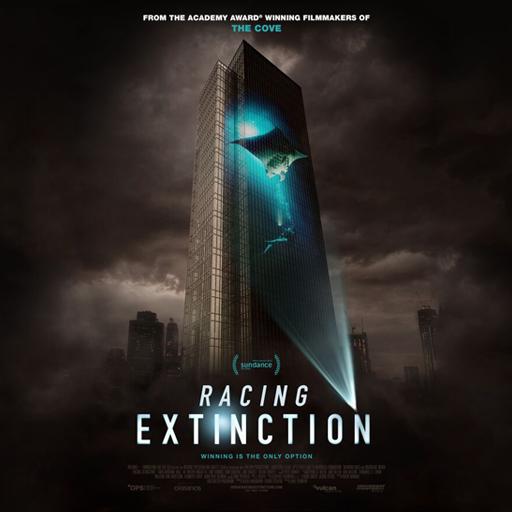manta ray racing extinction
