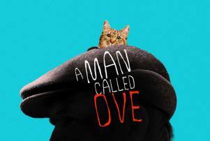 a man called ove cat
