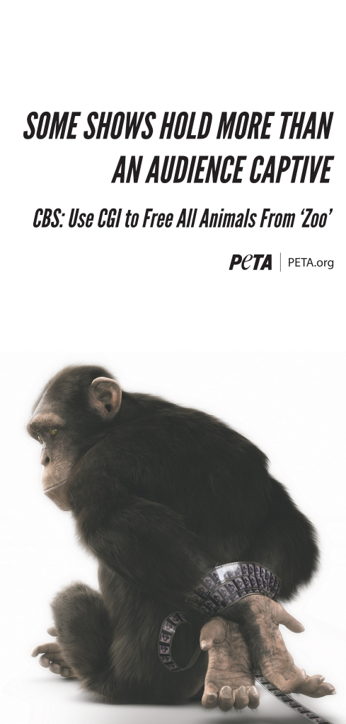 Chimp Ad Peta