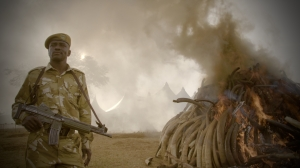 """""""We saw so many dead elephants,"""" Ladkani says. """"Not even half of them are in the film because we couldn't put more."""""""
