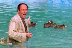 tony-and-the-ducks-600x337