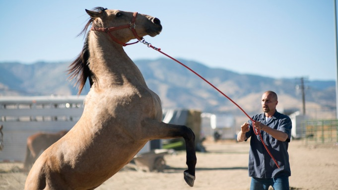 'The Mustang' Filmmaker Takes Journalistic Approach