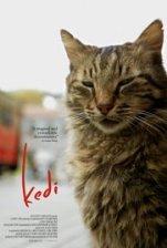 kediposter