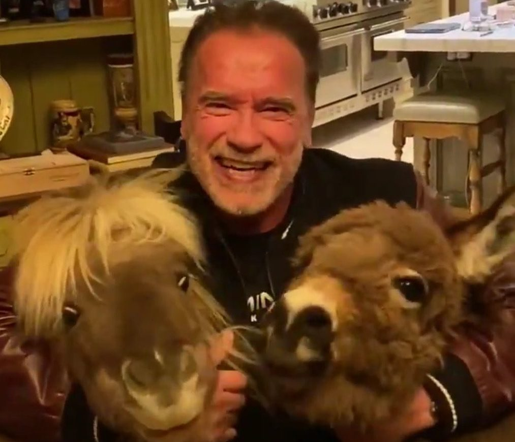 Arnold Schwarzenegger Posts Coronavirus Message With His Ponies Deadline