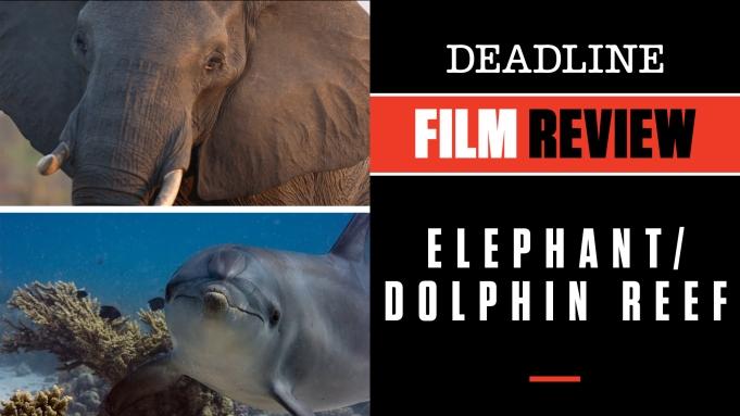 Elephant Dolphin Reef