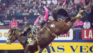 The Cowboy Channel Bucks Covid-19 To Present National Finals Rodeo