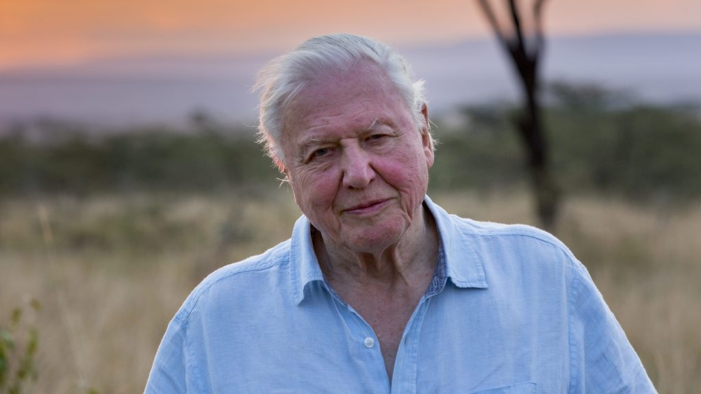 David Attenborough, espalda plateada