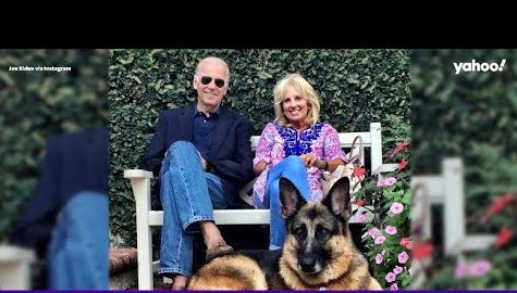 Newsmax Dogs President Biden's Pooch As Old, Ugly And Unkempt thumbnail