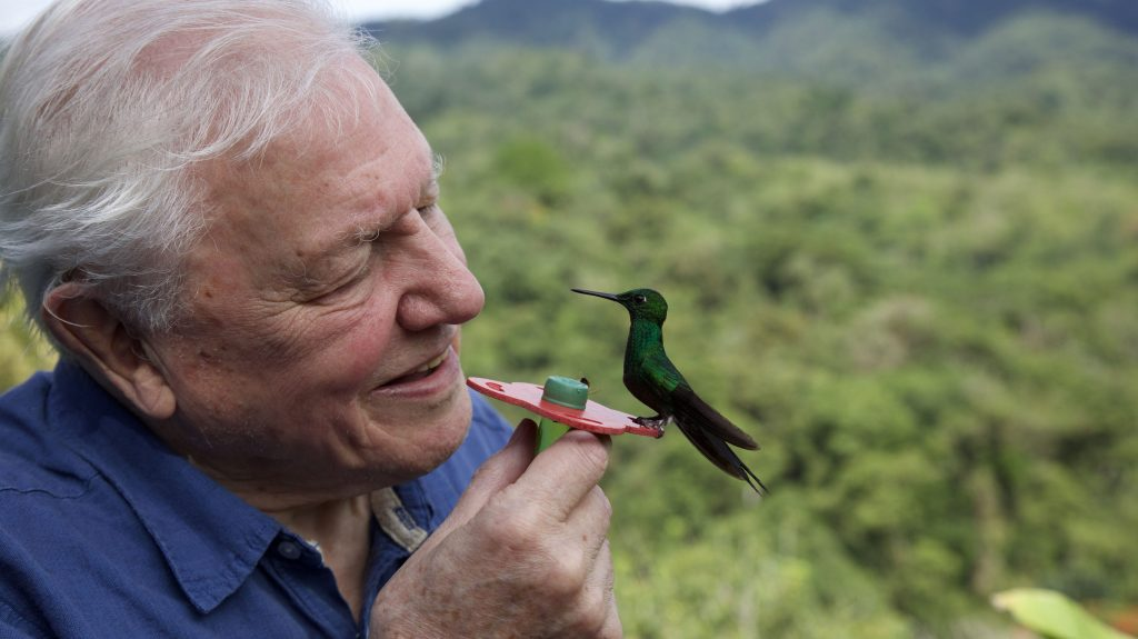 How Producers Of 'Attenborough's Life In Colour' Overcame A Covid-Ravaged Shoot To Deliver Early For The BBC & Netflix.jpg