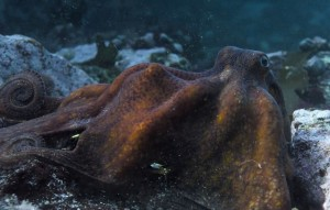 'My Octopus Teacher'