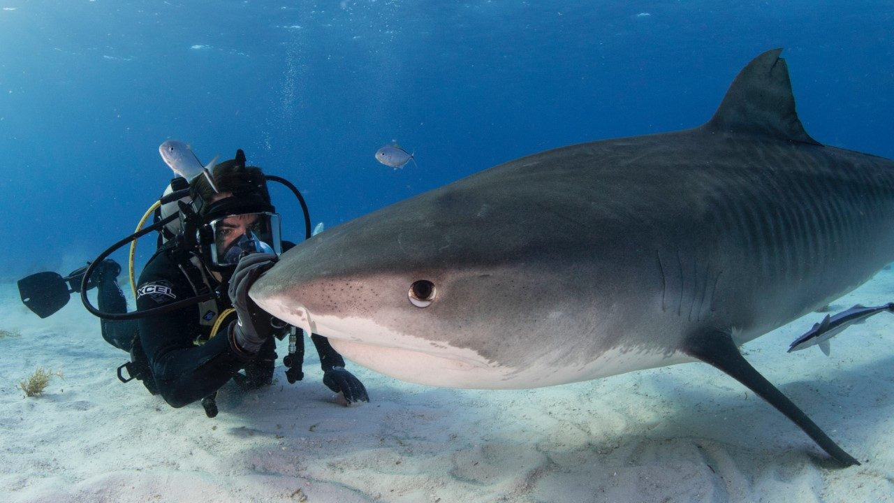 Eli Roth Spotlights Mass Slaughter Of Sharks With Discovery+ Doc 'Fin'