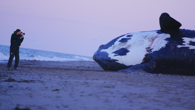 'Last Of The Right Whales'